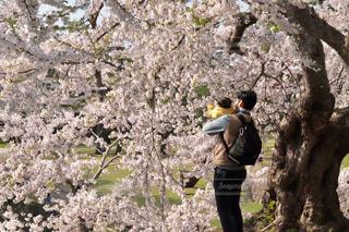 お花見の写真・画像素材[2381826]