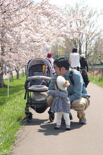 桜並木の写真・画像素材[2382921]