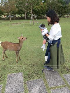 鹿さんと🦌の写真・画像素材[2384560]