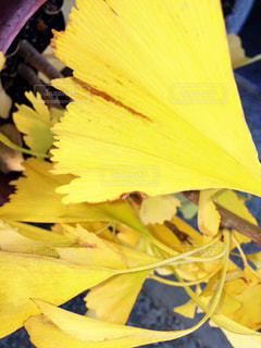 近くの花のアップの写真・画像素材[848927]