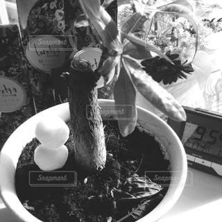 近くのテーブルの上に食べ物のプレートの写真・画像素材[852739]