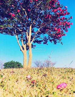 ピンクカサブランカ。 花言葉は♡永遠の愛♡の写真・画像素材[854196]