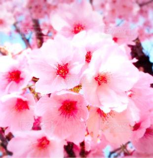 HAPPY PINK♡の写真・画像素材[854260]