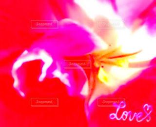 光とピンクと赤とLOVE☆彡の写真・画像素材[868471]