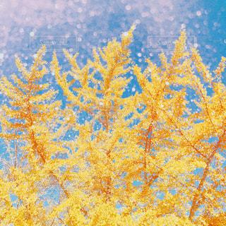 ❄️🍁 autumn 🏡❄️の写真・画像素材[869119]