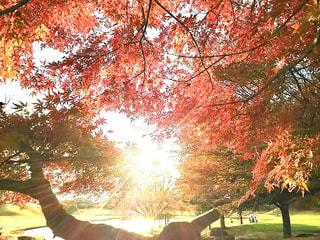 近くの木のアップの写真・画像素材[878577]