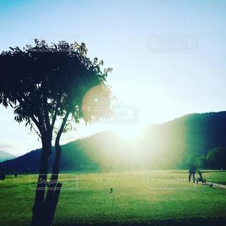 背景の木と大規模なグリーン フィールドの写真・画像素材[1175905]
