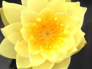 近くの花のアップの写真・画像素材[1200663]