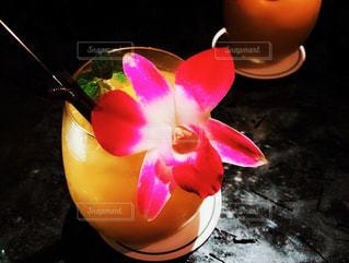 飲み物の写真・画像素材[1419700]