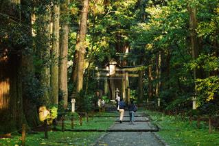 平泉寺白山神社 / 福井県の写真・画像素材[990416]