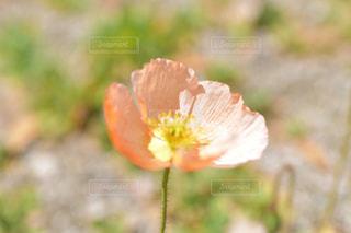 花の写真・画像素材[1988205]