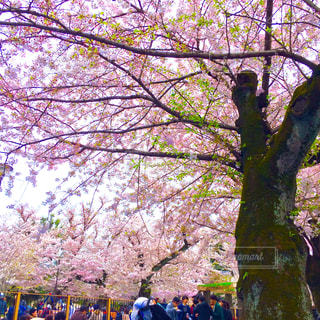 木の隣に立っている人のグループ - No.848184
