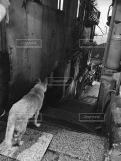 犬の黒と白の写真 - No.848275
