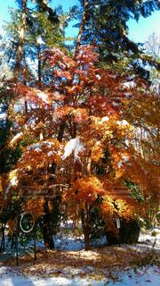 フォレスト内のツリーの写真・画像素材[849884]
