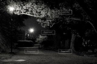 暗闇の中のツリー - No.847714