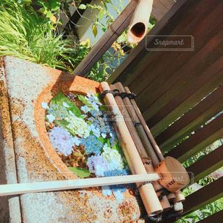 水上の紫陽花の写真・画像素材[1250565]