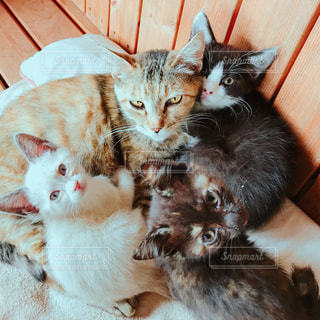 互いの上に横になっている猫の写真・画像素材[1261729]