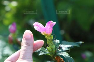 花を持っている手の写真・画像素材[848936]