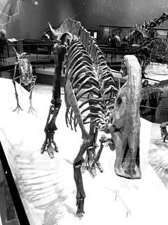 恐竜の散歩の写真・画像素材[848192]