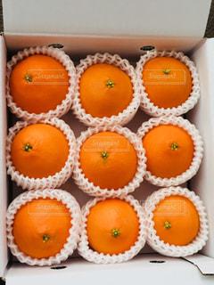 オレンジ,みかん,ギフト,紅まどんな,御歳暮