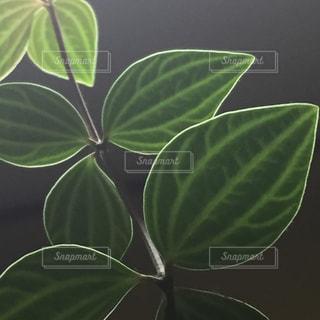 照明で縁どられた葉っぱの写真・画像素材[2735484]