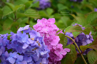 近くの花のアップ - No.848677
