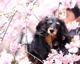 春風が・・の写真・画像素材[850606]