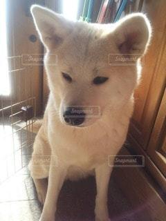 犬の写真・画像素材[35904]