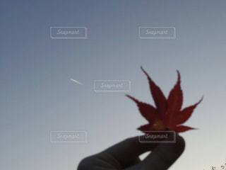 近くの花のアップの写真・画像素材[851052]