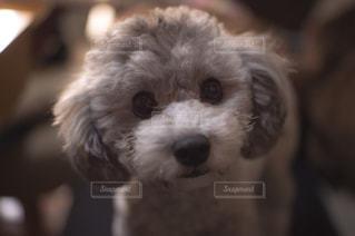 近くにカメラを見て犬のアップの写真・画像素材[1184286]