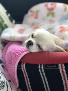 赤い毛布を着ている犬 - No.1048956
