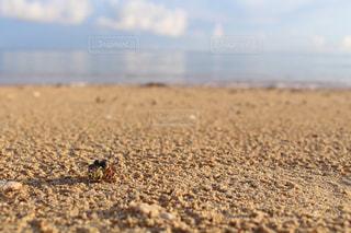 海,空,ビーチ,きれい,砂浜,沖縄,旅行,可愛い,ヤドカリ,無加工