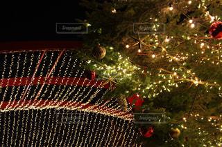 クリスマス ツリーの写真・画像素材[915117]