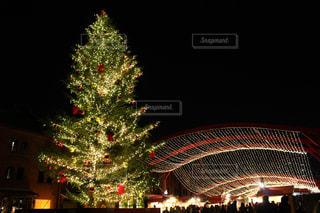 夜ライトアップされたクリスマス ツリーの写真・画像素材[915120]
