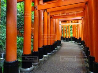 雨,京都,オレンジ,観光,伏見稲荷大社