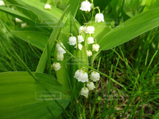 庭園の緑の植物の写真・画像素材[913265]