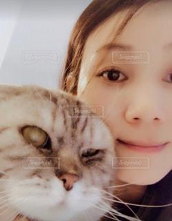 近くにカメラを見て猫のアップの写真・画像素材[853825]