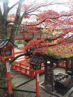 紅葉,京都,鞍馬