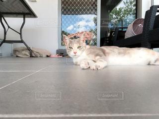 猫,空,木,庭,海外,白,雲,晴れ,青空,晴天,ベランダ,昼寝,お昼寝,休日,快晴,バルコニー,日曜日,美人猫,お天気