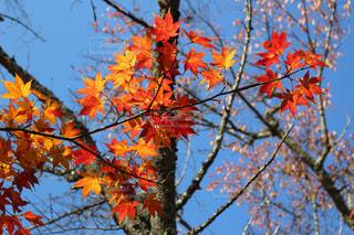 木の枝に座っている鳥の写真・画像素材[854330]