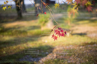 芝生のフィールドのツリーの写真・画像素材[869240]