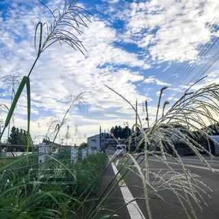 風景,空,秋,緑,雲,青空,青,草,ススキ,新潟,秋空