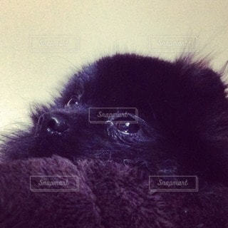 動物の写真・画像素材[38956]