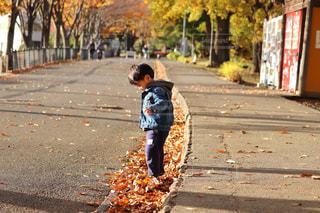 落ち葉で遊ぶ子供の写真・画像素材[902288]