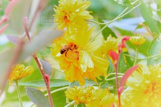 野に咲く花の写真・画像素材[1380573]