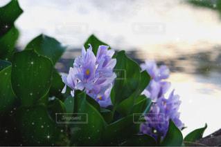 輝く花の写真・画像素材[1393862]
