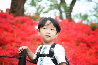 草の中に立っている小さな男の子の写真・画像素材[1486223]