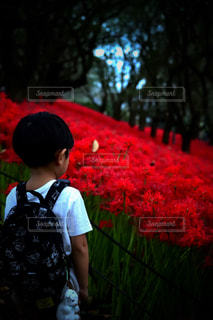 赤い空の写真・画像素材[1486234]