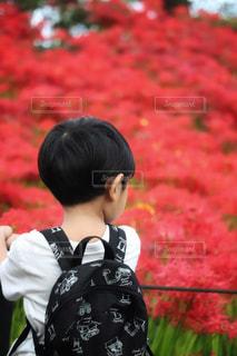 赤い空の写真・画像素材[1486251]