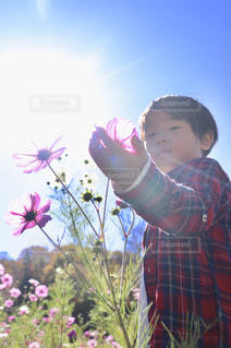 屋外,太陽,朝日,コスモス,光,人物,未来,少年,夢,ポジティブ,群馬県,みなかみ町,希望,可能性